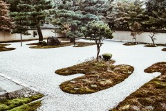 2020-apr28-edible-zen-garden-27