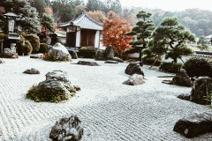 2020-apr28-edible-zen-garden-21