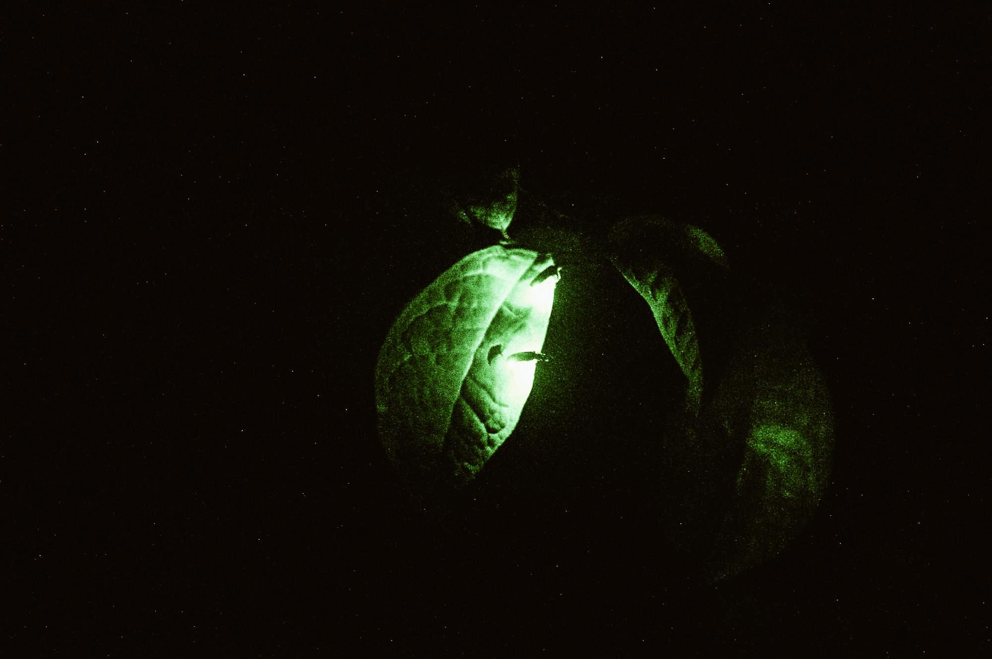 festival delle lucciole