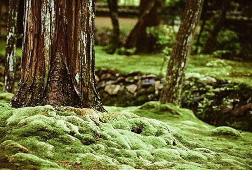 giardini del Giappone